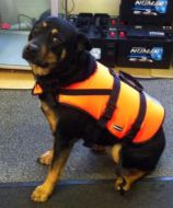 Baltic dog life jacket (Large) 15 - 40kg