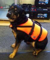 Baltic dog life jacket (Large) 15 - 40kg