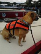 Baltic dog life jacket (small) 3 - 8kg